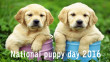 national puppy day coupons